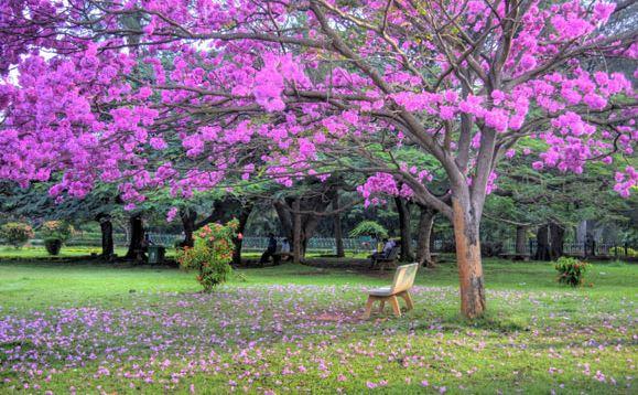 Cubbons-Park-Bangalore for couples